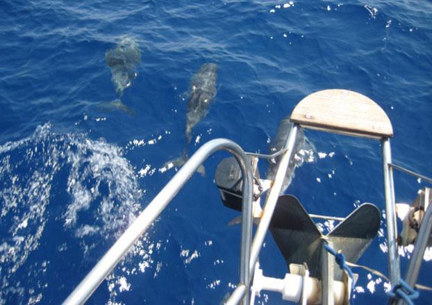 http://www.scancharter.com/wp-content/uploads/boats/14408_jeanneau-sun-odyssey-451-boat-charter-4.jpg