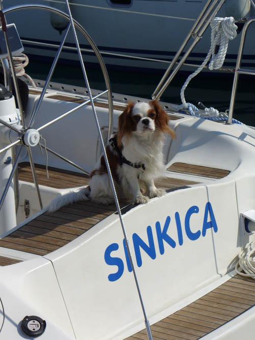 http://www.scancharter.com/wp-content/uploads/boats/16693_sinkica-003-161.jpg