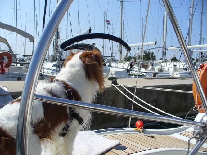 http://www.scancharter.com/wp-content/uploads/boats/16693_sinkica-016-64.jpg